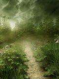 有雾的草甸 免版税库存图片