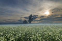 有雾的草甸 免版税图库摄影