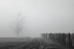 有雾的葡萄园 库存图片