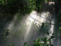 有雾的薄雾在森林/Rainforest/Woods里 库存图片