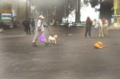 有雾的街道,大吉岭,印度的早晨视图  免版税库存照片