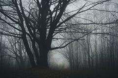 有雾的被困扰的森林在万圣夜 免版税库存图片