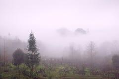 有雾的谷 免版税库存图片