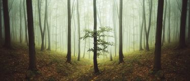 有雾的超现实的对称森林 库存图片