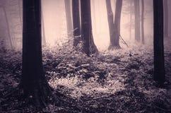 有雾的超现实的被困扰的森林在万圣夜 库存照片