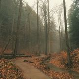 有雾的路径 免版税图库摄影