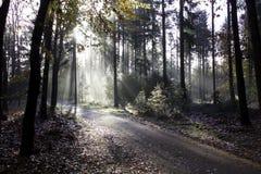 有雾的路 库存图片