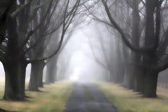 有雾的车道3 库存图片