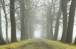 有雾的运输路线 免版税库存图片