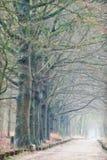 有雾的道路 库存照片