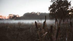 有雾的领域在俄罗斯 免版税图库摄影