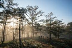 有雾的,杉木森林秋天秋天风景有雾的早晨,光芒摄影师在杉木森林里 库存图片