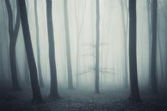 有雾的令人毛骨悚然的森林和树在晚秋天 免版税库存照片