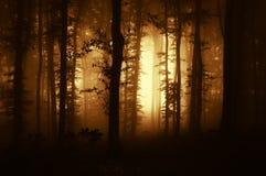 有雾的黑暗的可怕森林在日落 免版税库存图片