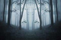 有雾的黑暗的对称蠕动的森林在晚秋天 免版税图库摄影