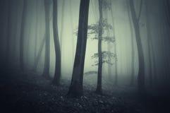 有雾的黑暗的飘渺森林 免版税库存图片