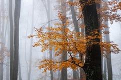 有雾的11月在森林里 库存照片