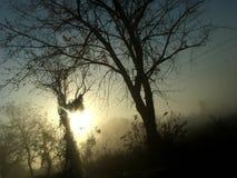有雾的11月早晨 免版税库存图片