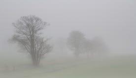 有雾的结构树 免版税库存图片