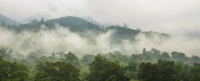 有雾的绿色森林在山全景 库存照片