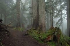 有雾的阴霾的森林与树桩 库存照片