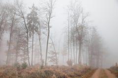 有雾的autumnally森林 库存照片