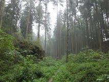 有雾的Forrest 免版税库存照片