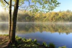 有雾的Mountain湖春天海岸线在黎明 免版税库存图片