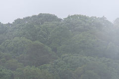 有雾的moutain 库存照片