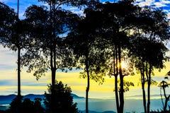 有雾的Olorful,神秘的森林在早晨 免版税库存图片