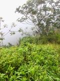 有雾的puerto雨林rico 免版税图库摄影