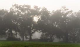 有雾的St Francisville早晨 免版税库存照片