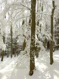 有霜和阳光的冬天森林 库存图片