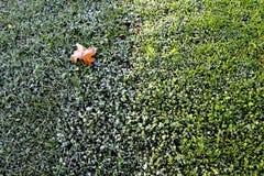 有霜的草甸 库存图片
