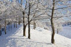 有霜的落叶树森林 库存图片