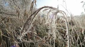 有霜霜水晶的里德在冬时 股票视频