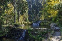 有露台的河、瀑布和不同地树的老公园Tsarska或皇家Bistritsa在令人尊敬的秋季森林里 库存照片