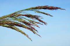 有露水的藤茎。 免版税库存照片