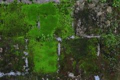 有青苔和地衣的老石墙 免版税库存照片