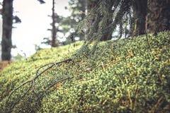 有青苔和草的神奇森林地在葡萄酒颜色 库存照片
