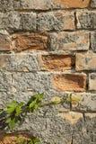 有青苔生长的老砖墙 免版税库存照片
