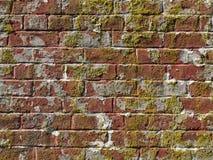 有青苔生长的老被佩带的红砖墙壁 免版税库存照片