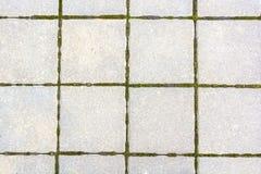 有青苔的白方块瓦片在他们之间 免版税库存照片
