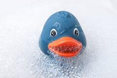 有青苔的蓝色橡胶鸭子玩具在浴 免版税图库摄影