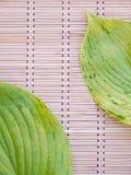 有静脉的两片绿色叶子在竹席子 库存图片
