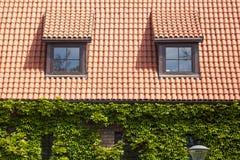 有顶楼的Windows老红色陶瓷木瓦有绿叶或葡萄hederacea的屋顶和墙壁 免版税图库摄影