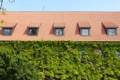 有顶楼的Windows老红色陶瓷木瓦有绿叶或葡萄hederacea的屋顶和墙壁 免版税库存照片