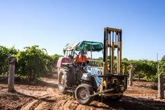 有顶部机器的拖拉机在葡萄园里 库存照片