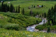 有顶饰小山科罗拉多山风景和野花 免版税库存图片