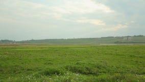 有领域的绿色草甸开花在与白色云彩的蓝天下 股票视频